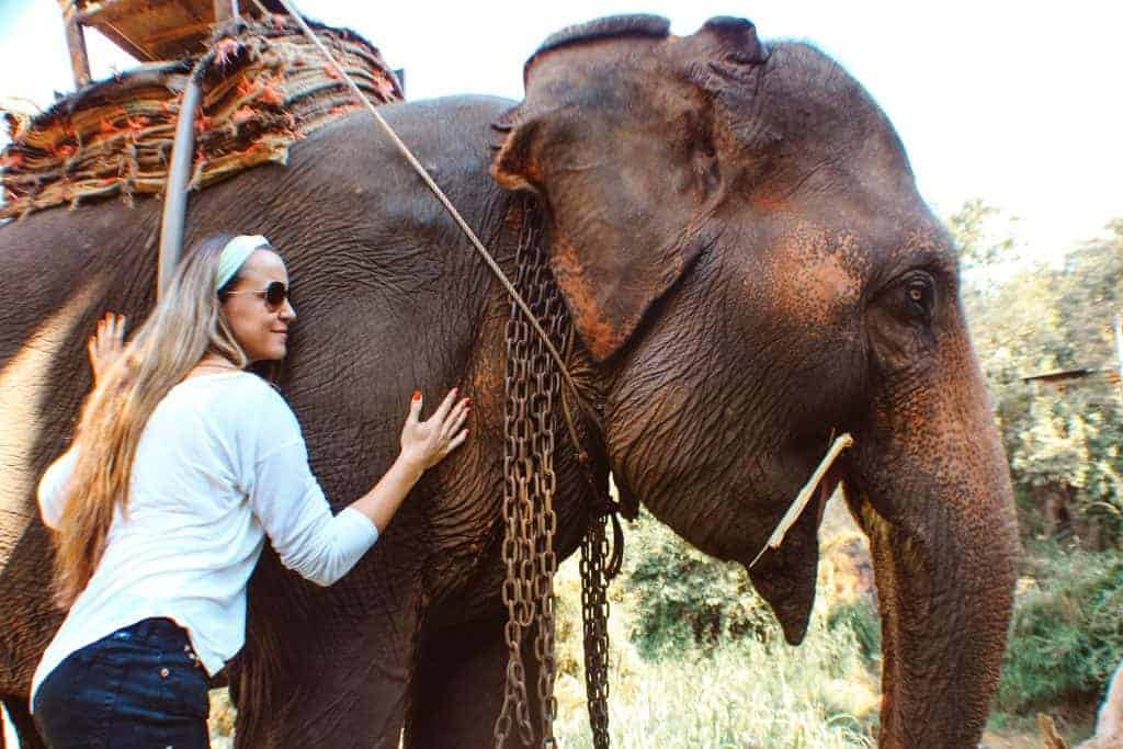 Ethical tourism do not abuse animals