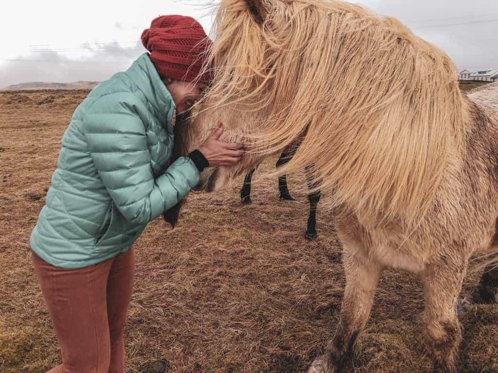 Icelandic horses - travel guide