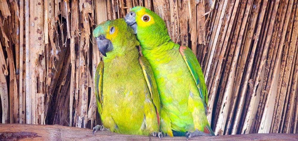 Brazil nature adventure parrots
