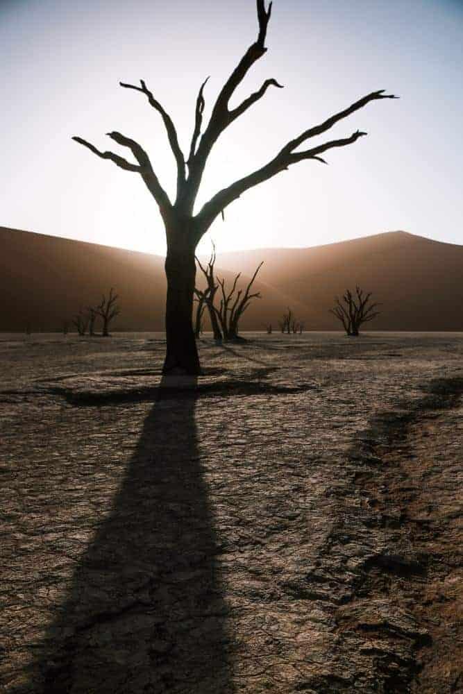Namibia desert self-drive in Deadsvlei