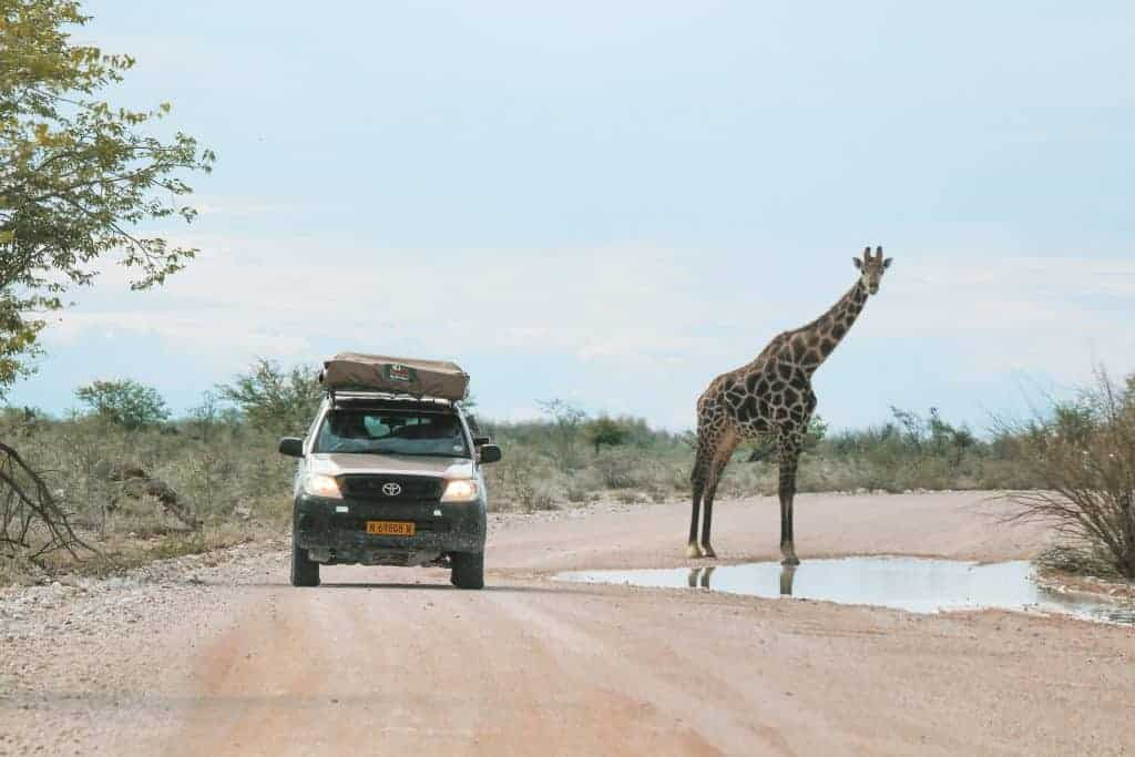Namibia itinerary safari self-drive in Etosha