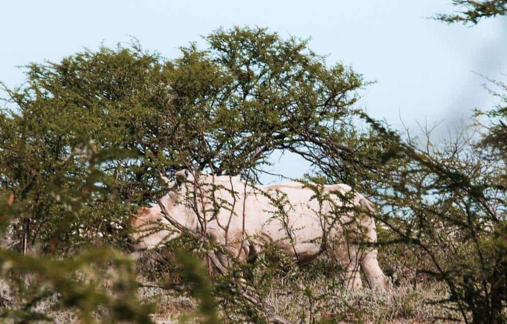 Namibia self-drive safari in Etosha