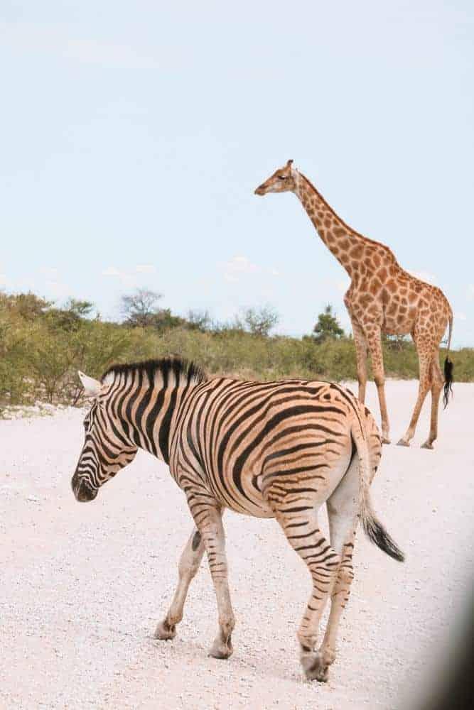 Namibia Etosha safari itinerary