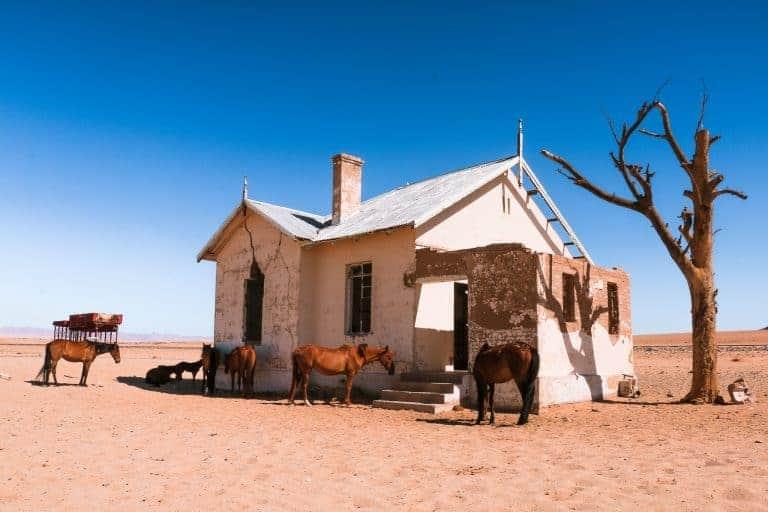 wild horses in Namibia self-drive