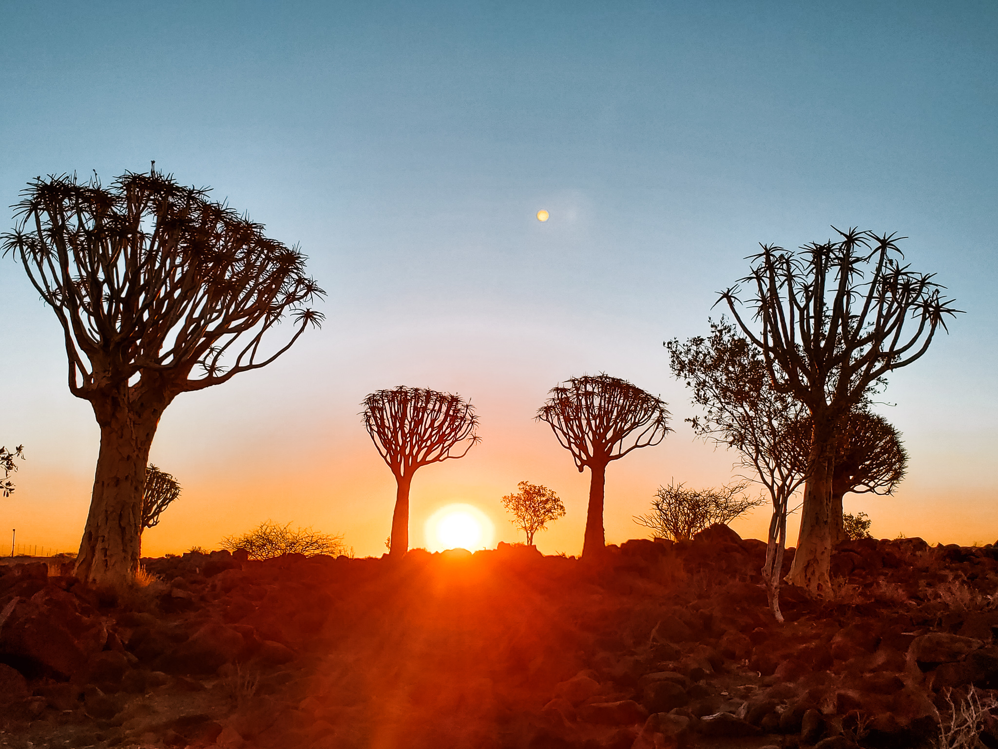 Namibia in 25 photos Quivertree Forest
