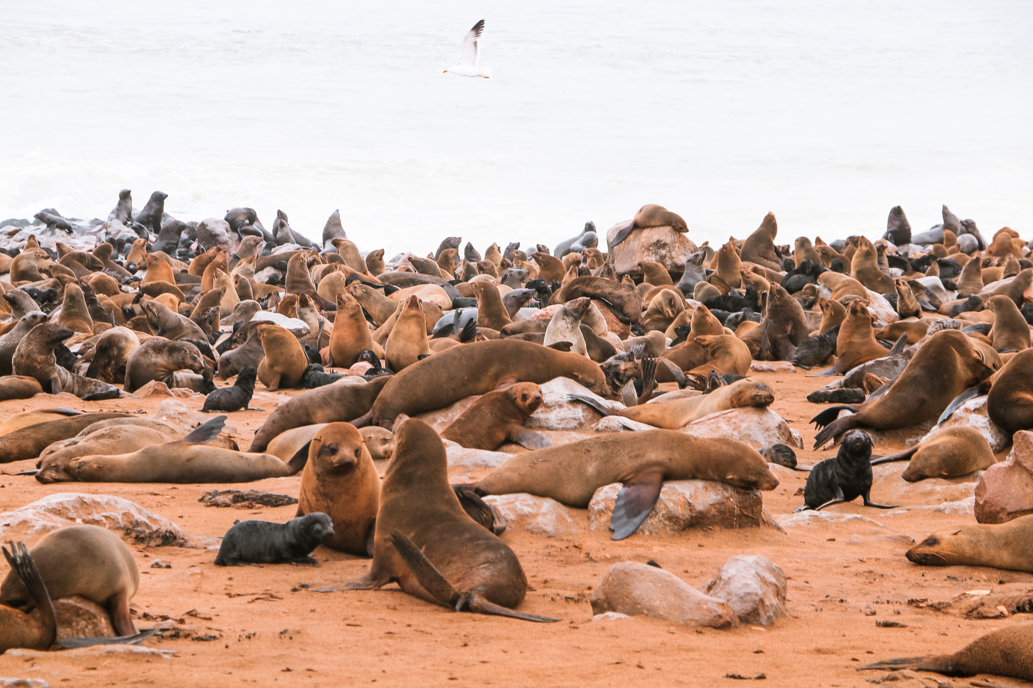 Namibia photos to inspire you to travel to Cape Cross