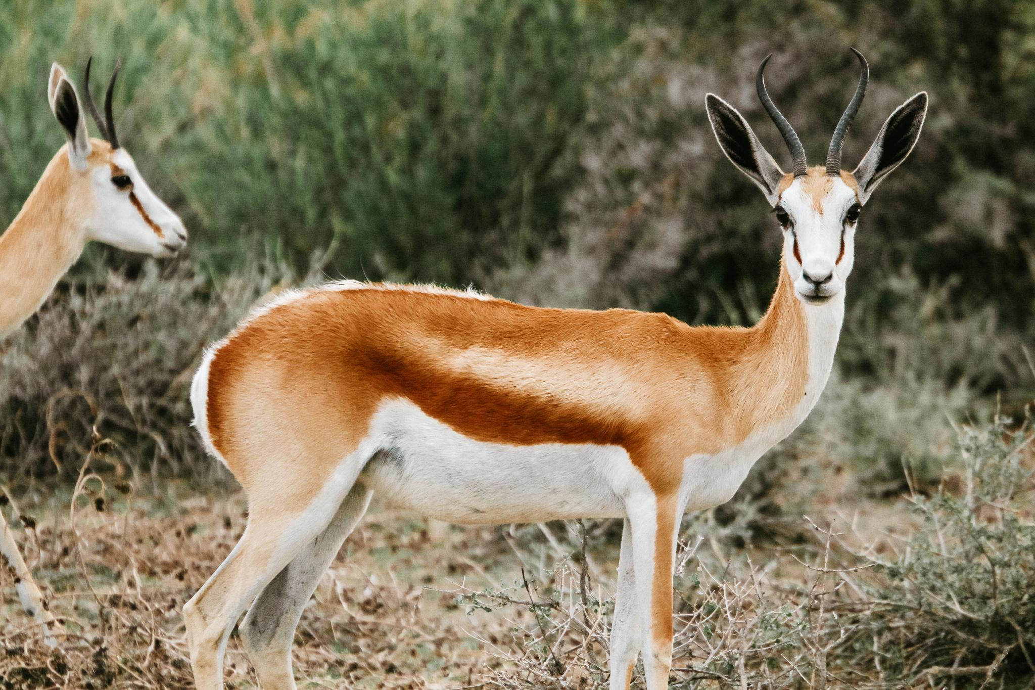 The wildlife in Etosha inspires you to travel to Namibia