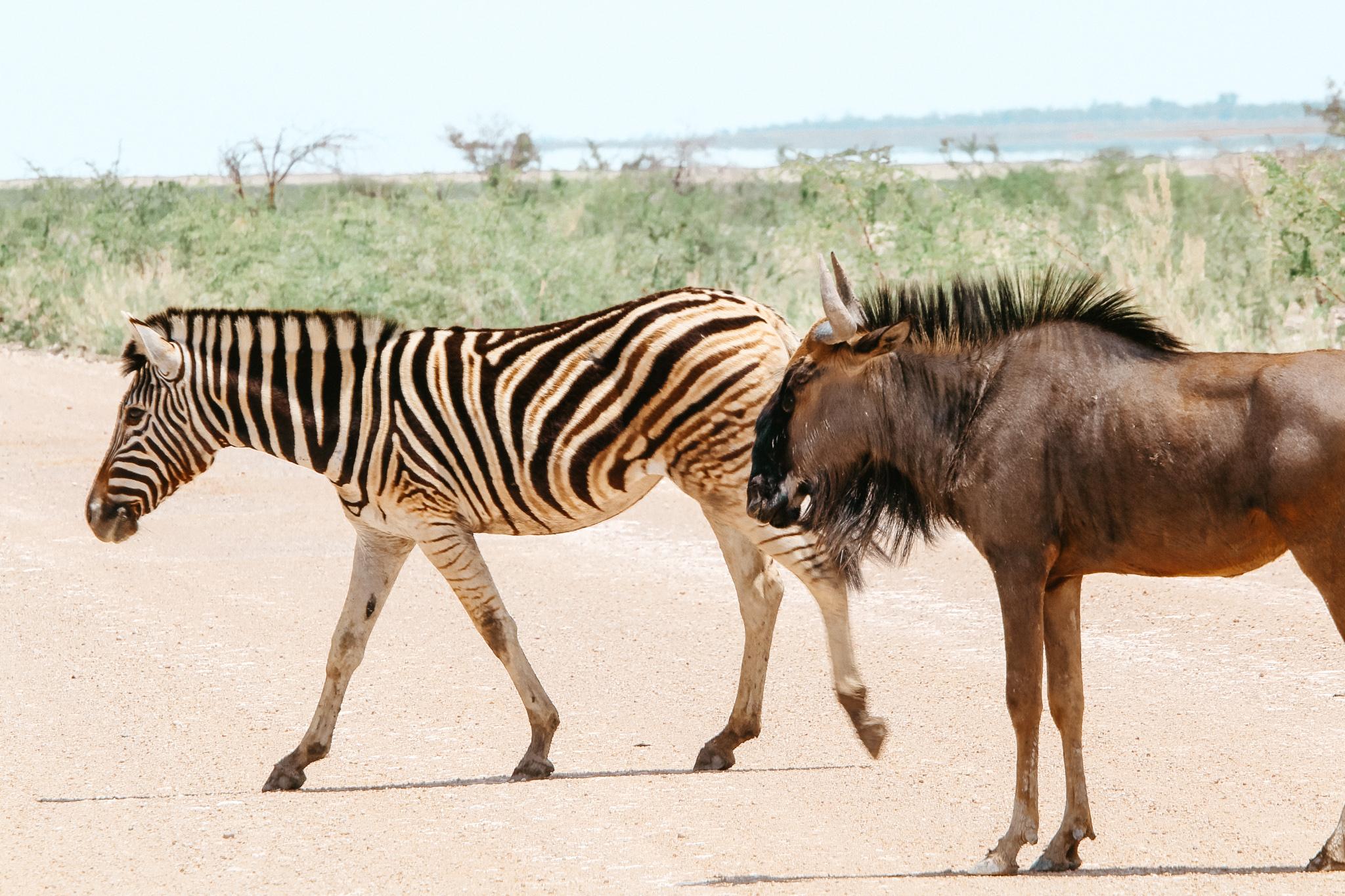 Etosha is paradise to take photos of Namibia