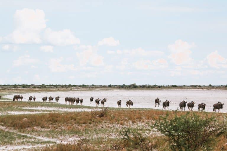 Get inspired to visit Etosha in Namibia