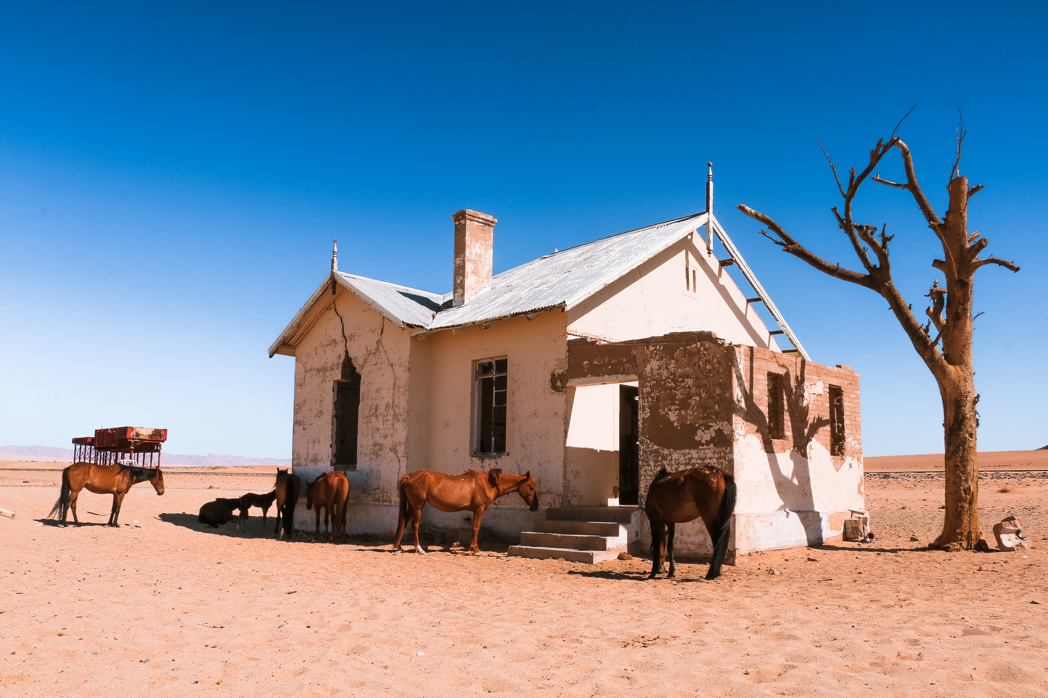 Namibia photos to inspire you to travel and see the wild horses