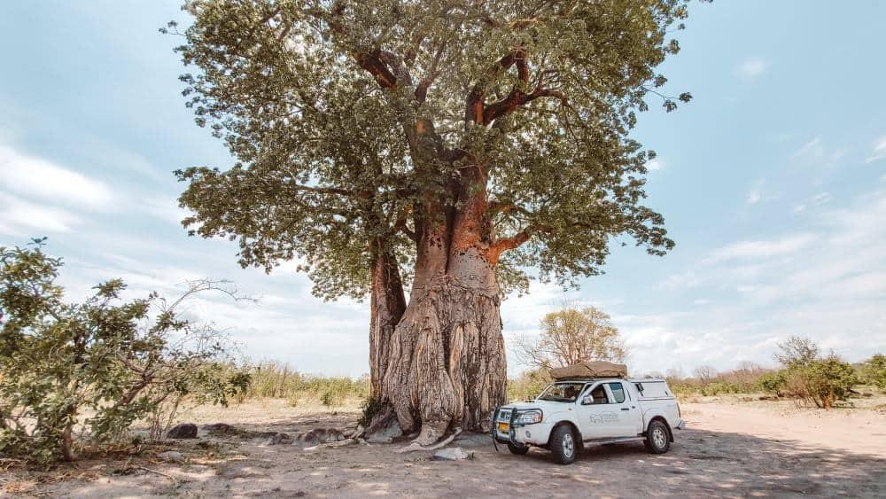 Savuti National Park in Botswana CAMPING SAFARI