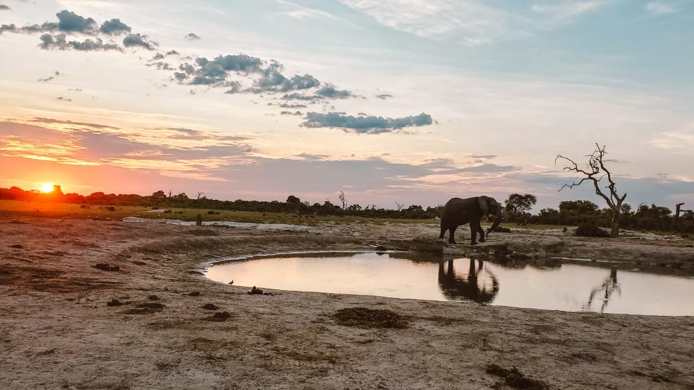 Botswana safari and camping in Savuti