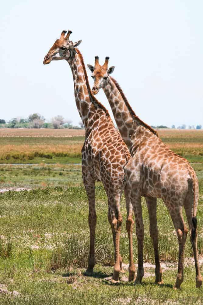 safari in remote areas of Botswana
