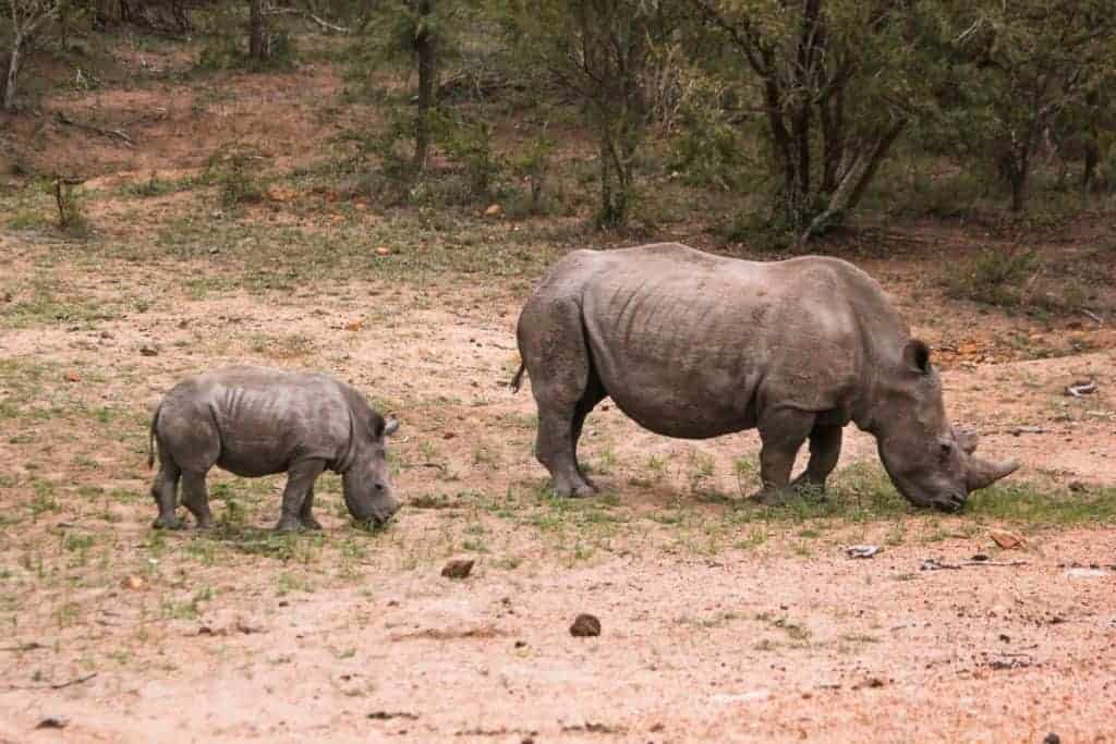 a inspiring picture of rhinos during our photo safari