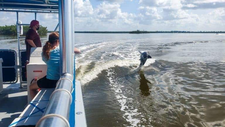 Ten Thousand Islands boat tour