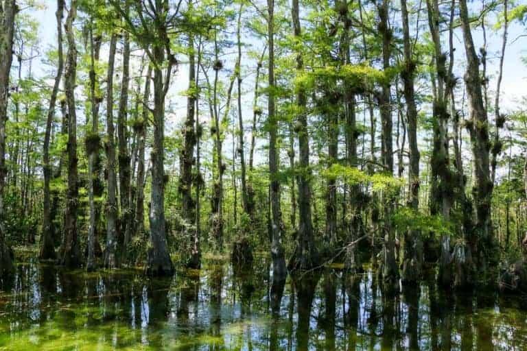 Everglades road trip in Florida USA