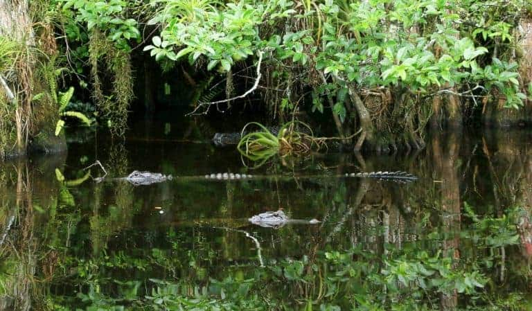 Driving at Everglades in Florida USA