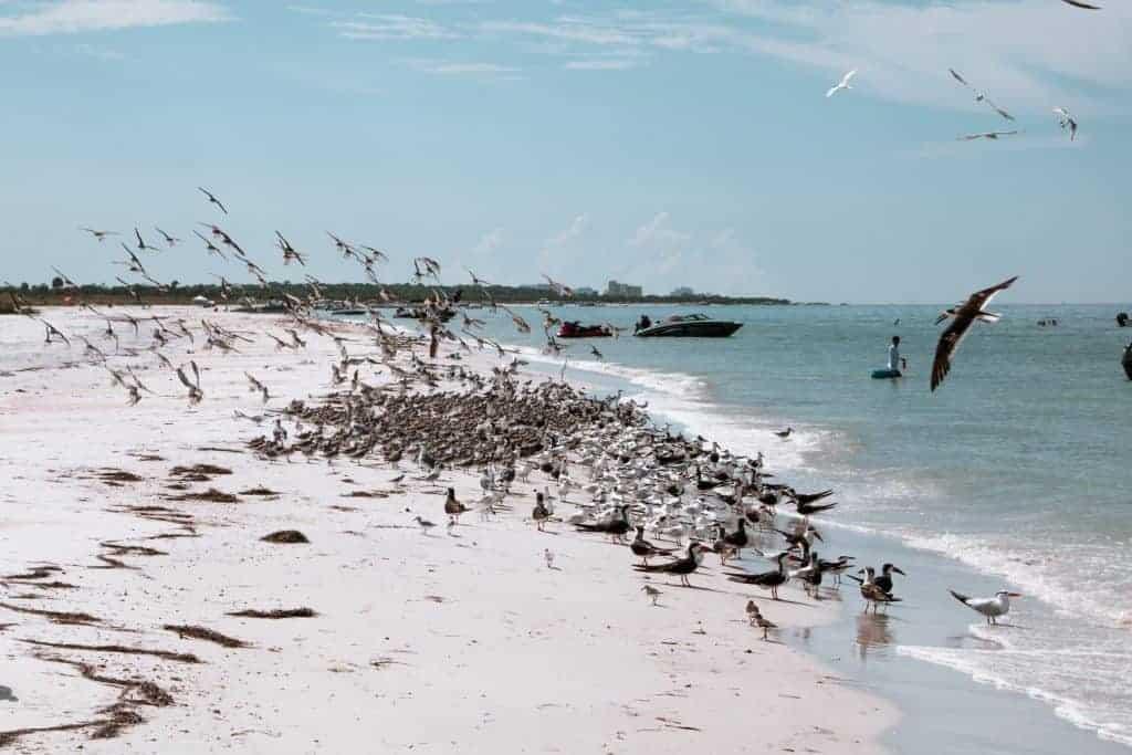 Honeymoon Island Caladesi Island State Park in Florida