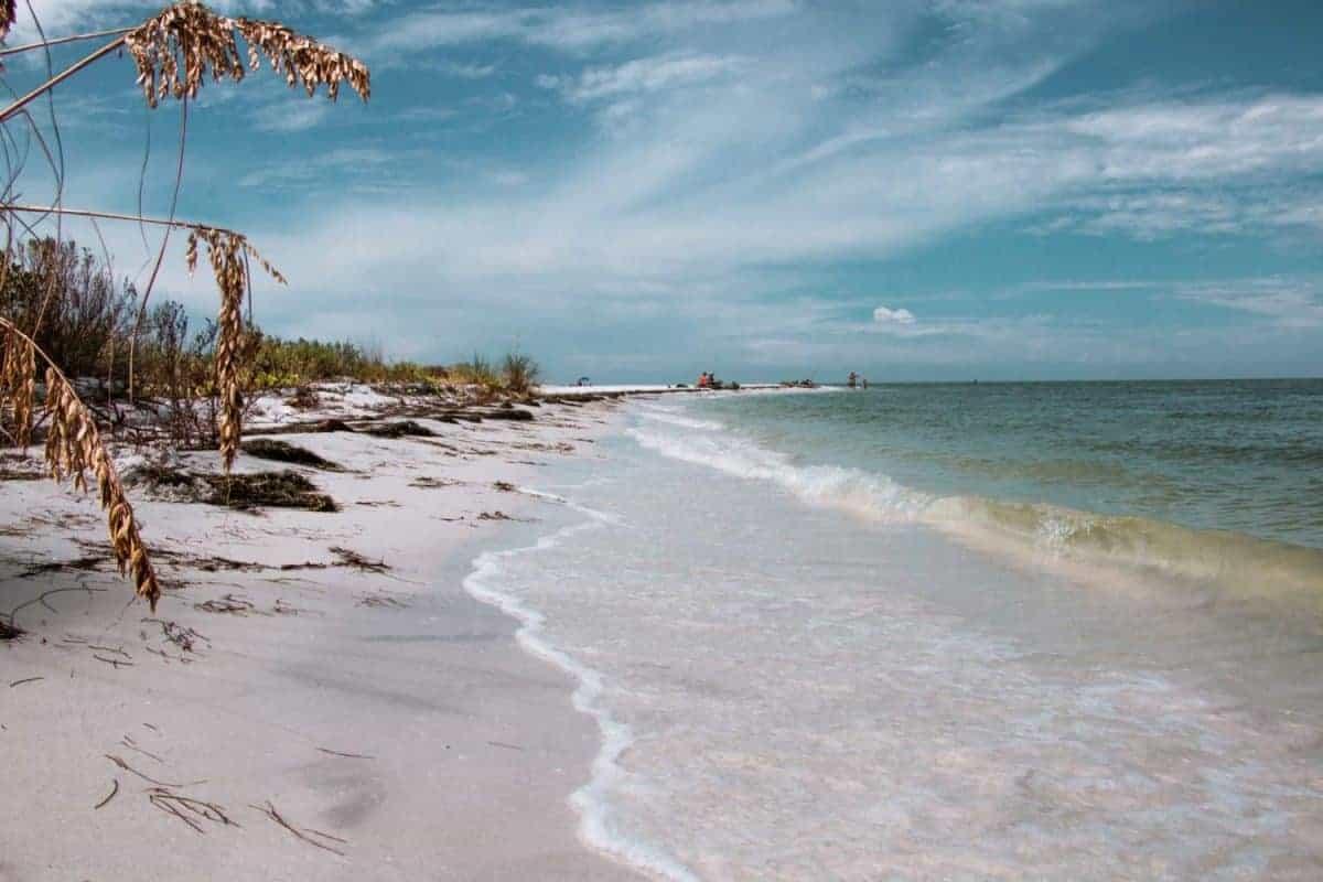 Honeymoon Island Caladesi Island Florida