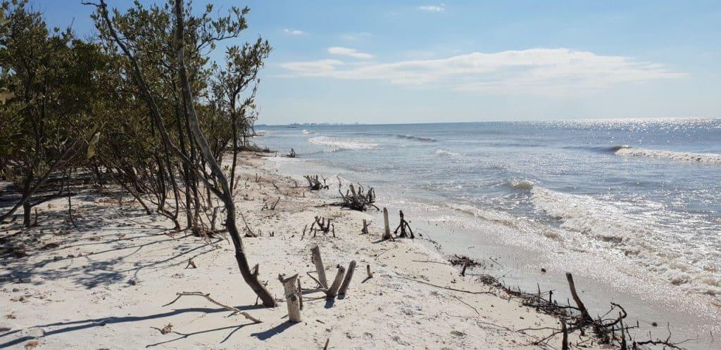 Honeymoon island in florida is a must do in Florida