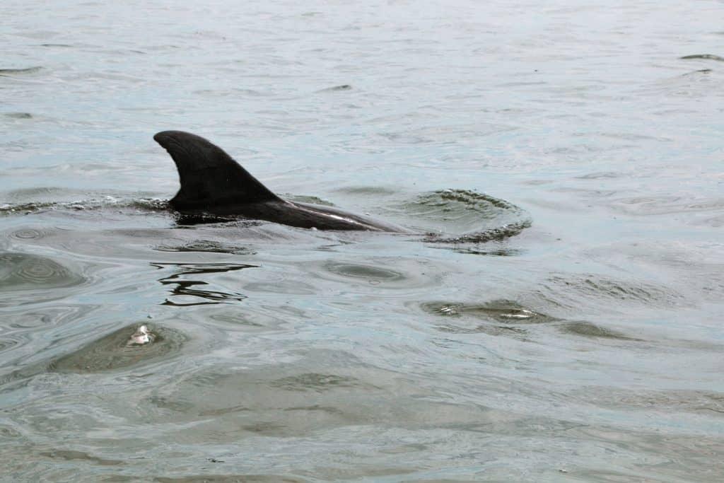 Wildlife at the Honeymoon Island Caladesi Island State Park in Florida