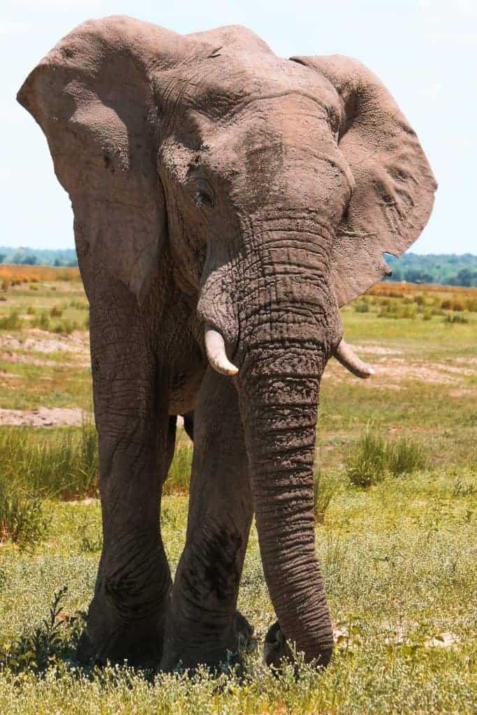 Best Botswana Safaris