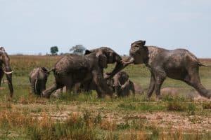 Botswana safari from Chobe to Okavango Delta