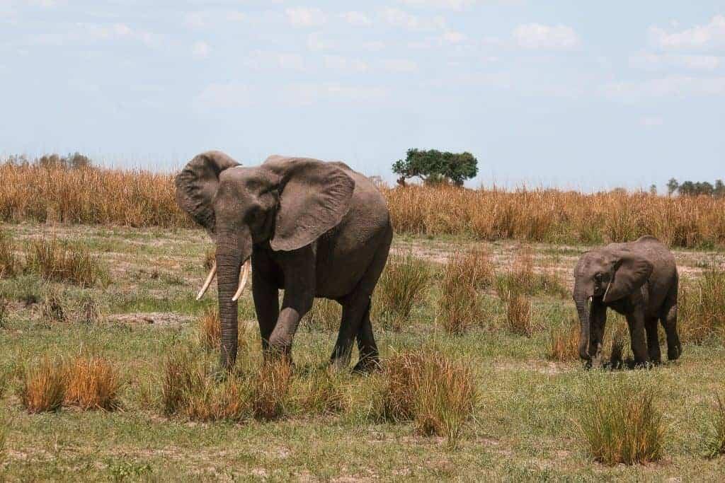 Maun Botswana