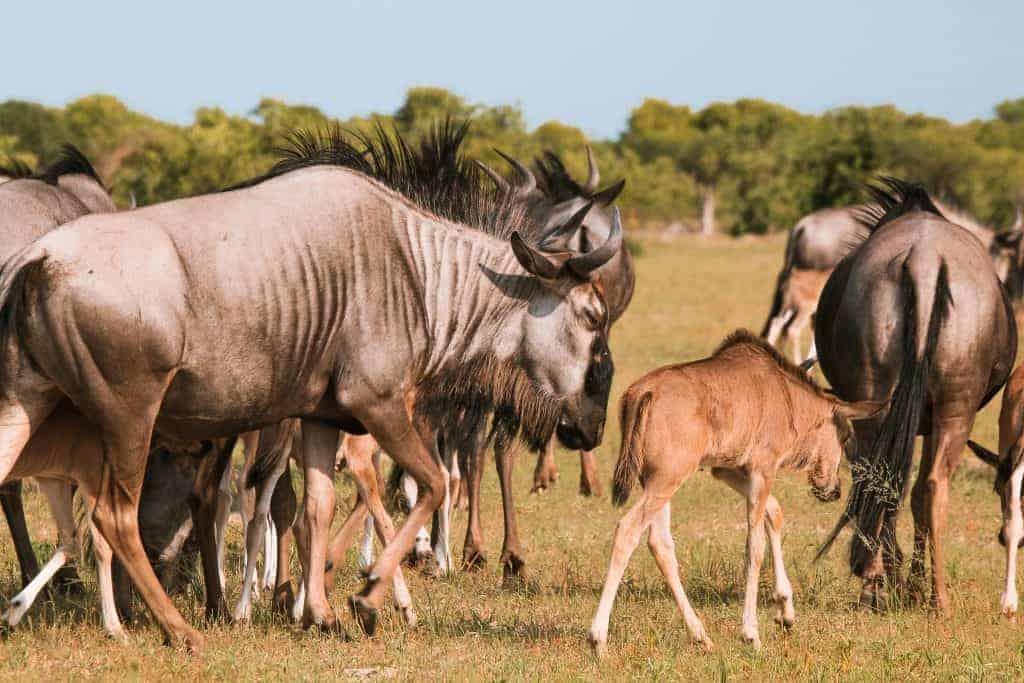 Chobe nacional park