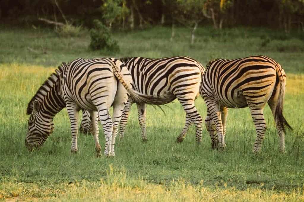 Okvango Delta Safari