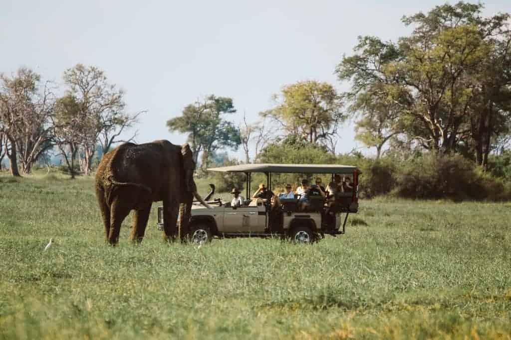 Botswana safari at Savuti