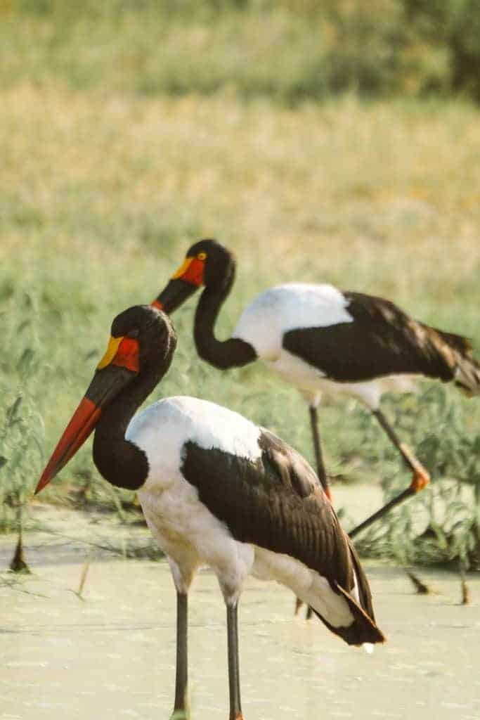 Botswana self-drive safaris