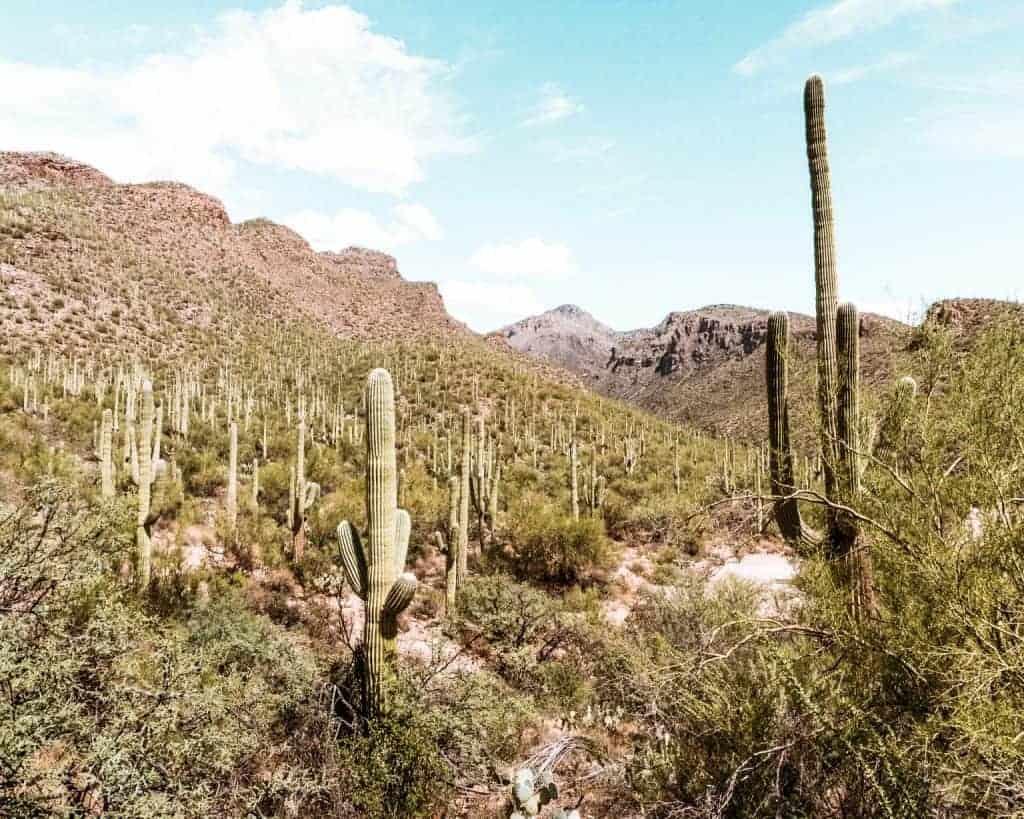 Seven Falls Best Hiking in Arizona